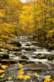 Yellow leaves surround rushing waters. Royalty Free Stock Image