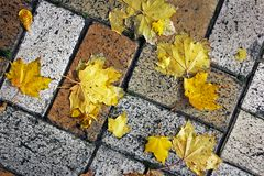 Yellow leaves on the tile. Background.  royalty free stock photos
