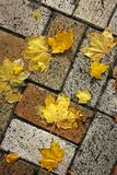 Yellow leaves on the tile. Background royalty free stock photography