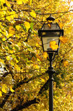 Yellow Leaves on a tree - Autumn scenery in Tuscany Royalty Free Stock Photo