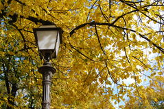 Yellow Leaves on a tree - Autumn scenery in Tuscany Royalty Free Stock Images