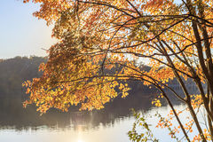 Yellow leaves of the tree with sun reflection over the lake stock images