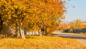 Yellow leaves on the trees along rural road Stock Images