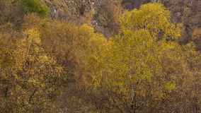 Yellow leaves on the trees golden autumn in the mountains of the Caucasus. Russia, Kabardino-Balkaria late autumn. Yellow leaves on the trees golden autumn in stock footage