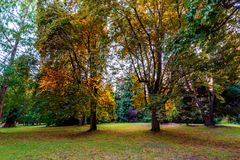 Yellow leaves of trees illuminated by evening sun rays in a gree. N, autumn park with trees and shrubs Stock Images