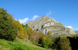Yellow leaves on the trees in the mountains Stock Photography