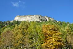 Yellow leaves on the trees in the mountains Stock Images