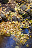 Yellow leaves at the water's edge. Stock Photography