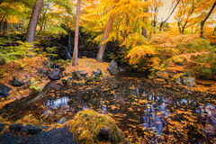 Yellow leaves waterfall lake garden in autumn Stock Photos
