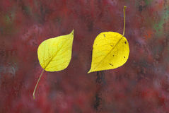 Yellow leaves on the wet glass Royalty Free Stock Photography