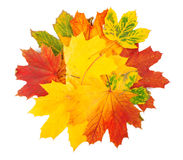 Yellow leaves on white Royalty Free Stock Photography