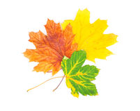 Yellow leaves on white Stock Photography