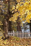Yellow leaves and white fence. Royalty Free Stock Photos