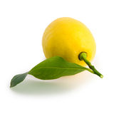 Yellow lemon. Rear view of a yellow lemon with its leaf. Laid on a pure white background with clipping path (excluding the drop shadow stock images