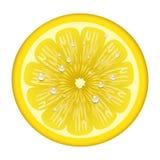 Yellow lemon fruits svector illustration vegetarian diet cytrus freshness tropical slice Royalty Free Stock Photography