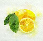 Yellow lemon with green leaves watercolor painting Stock Photos