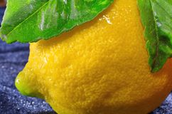 Yellow lemon with leaves - macro Stock Photography