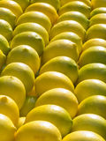 Yellow lemons  on a bench Stock Photography