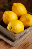 Yellow lemons organic. Yellow lemons of Sorrento organic on the wooden table royalty free stock images