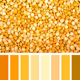 Yellow lentil palette Stock Photo