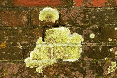 Yellow lichen brick wall Stock Image