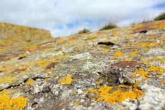 Yellow lichen on old concrete structure royalty free stock photo