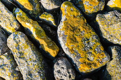 Yellow lichen on the rocks Stock Photos