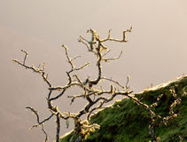 Yellow lichen on tree twigs Stock Photo
