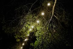 Yellow light bulbs at the night, electric garland hanging on the tree. Festival decoration stock photos