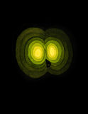 Yellow light of night beast eyes Royalty Free Stock Images