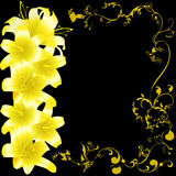 Yellow lili 2 Royalty Free Stock Photography