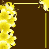 Yellow lili 4 Royalty Free Stock Images