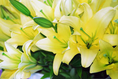 Yellow lilies. Close-up on bouquets of yellow lilies Stock Photo