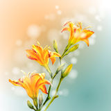 Yellow lilies flowers background. Stock Photography