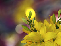 Yellow lilies  flowers,on the bright blurred background with round white, yellow highlights.   Closeup.  Bright floral composition Royalty Free Stock Photography