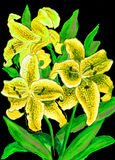Yellow lilies Stock Images