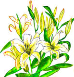 Yellow lilies, painting Royalty Free Stock Images