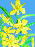 Yellow daily lilies Royalty Free Stock Photos