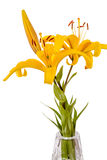 Yellow lilies in a vase Royalty Free Stock Photography
