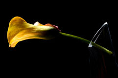 Yellow lilly design. Yellow lily design isolated on black Stock Photo