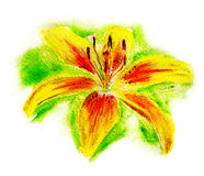 Yellow lily stock images
