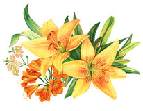 Yellow lily flower watercolor bouquet. Yellow lily flowers watercolor bouquet Royalty Free Stock Photo