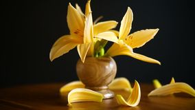 Yellow Lily flowers and buds. Yellow Lily flowers on a wooden table
