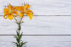 Yellow lily flowers on a wooden table Stock Images