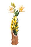 Yellow lily flowers in wooden vase isolated Royalty Free Stock Photos
