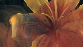 Yellow lily ink in water. Yellow lily and paint in water. Abstract ink in water stock footage