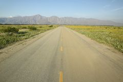 A yellow line and lonely roadway through flower fields in the Spring, Anza Borrego State Park, CA Stock Photos