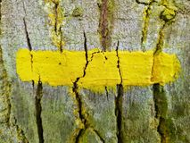 Yellow Line on the Bark. Yellow Line painted on the tree bark - French sign for a hiking trail Royalty Free Stock Photos
