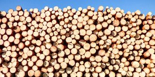 Lots of timber wood with blue sky Royalty Free Stock Image