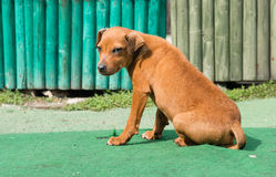 A lonely young puppy dog Stock Photos